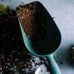 Nová záhrada – tipy a rady pre začiatočníkov